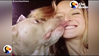 Pit Bull With No Ears Finally Finds Love | The Dodo