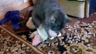 Кот хочет кошку. Но была только овца.