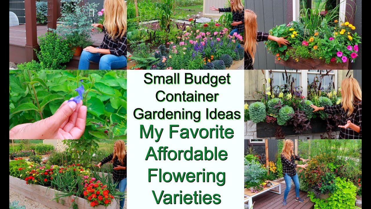 Small Budget Container Gardening Ideas Affordable Flower