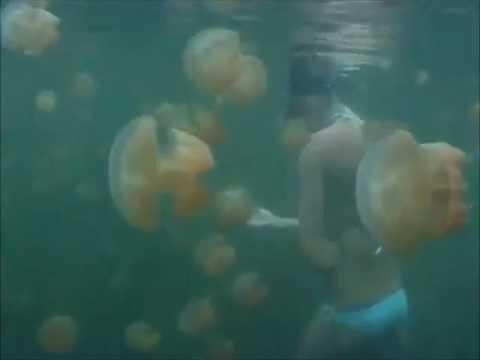 Jellyfish In Palau Island - Music By Maya Lakhani