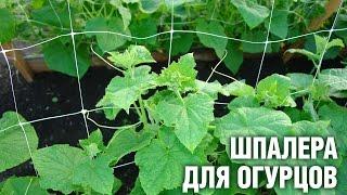 Шпалеры для огурцов своими руками | Hitsad.ru(, 2016-04-18T08:03:41.000Z)