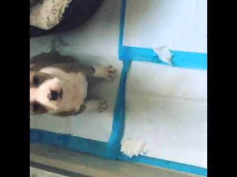My cute puppy camila