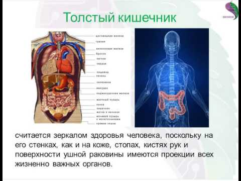 Аутоиммунный тиреоидит - причины, симптомы, диагностика и