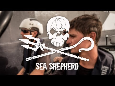 Join Sea Shepherd: Passion is All you Need