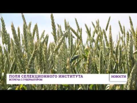 знакомства украина одесская обл. г.белгород-днестровский.
