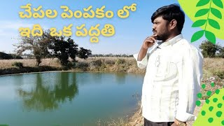 fish farming in agricultural land,fish farming in telugu