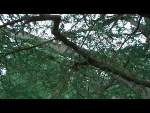 Summer Explorers' Camp Frelinghuysen Arboretum Walking Tour July 8, 2015