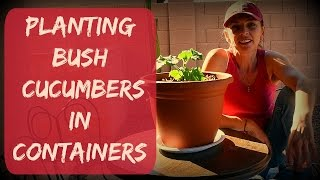 How to Grow Cucumbers in Containers or Pots - Vegetable Garden in Arizona - Container Gardening