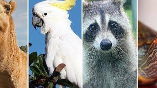 На Кубани все чаще заводят экзотических животных