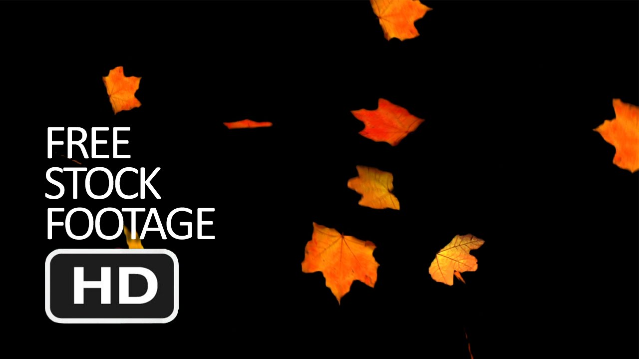 Free Stock Video Footage Falling Autumn Leaves Black Background Hd Youtube