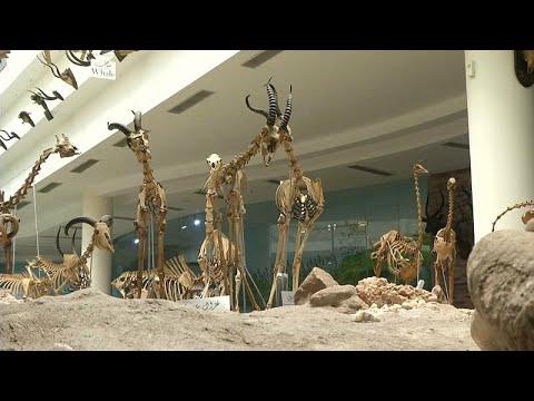 شاهد: محنطات الحيوانات المنقرضة والنادرة في المتحف الحيواني بالجيزة …  - نشر قبل 3 ساعة