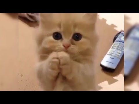 Cute is Not Enough - Funny Cats and Dogs Compilation #49