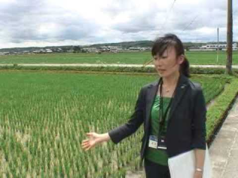Waste management at corporate Japan
