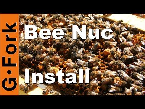 Start a Beehive with a Nuc - Beekeeping 101 - GardenFork