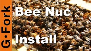 Start a Beehive with a Nuc - Beekeeping 101 - GardenFork.TV