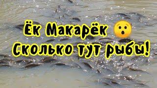 ЛОВЛЯ рыбы в ЛУЖЕ