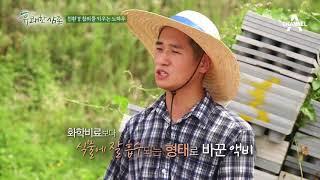 [농사비법] 농부가 직접 만든 친환경 '참외 액비' & '천연 퇴비'!
