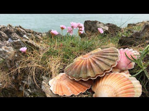 Coastal Foraging/Exploring -