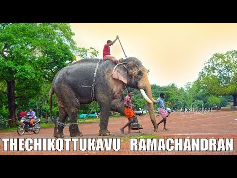 Thechikottukavu Ramachandran & Devidasan 😍😍 | ROYAL ENTRY