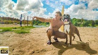 Собака боксёр на турниках