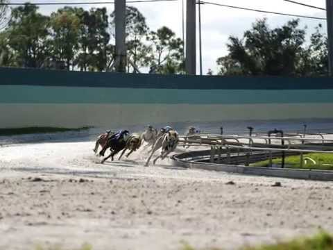 A Day At The Palm Beach Dog Track