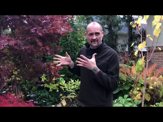 Walking Tour of Paul Gellatly's private garden in Fall