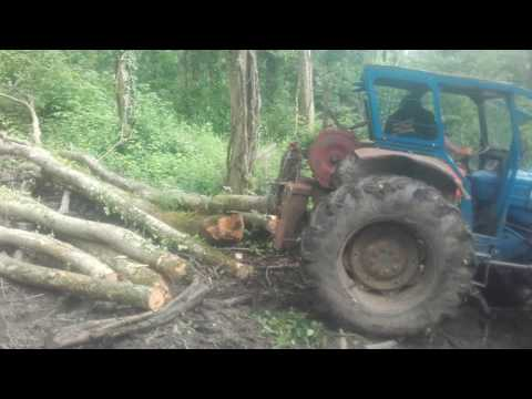 Westhill forestry