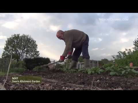 Geoff's Allotment 2013 - 2016