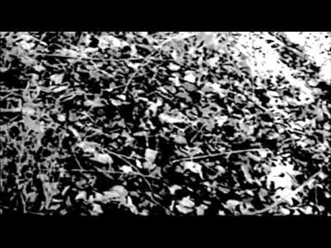 Trailer do filme A Bruxa de Blair