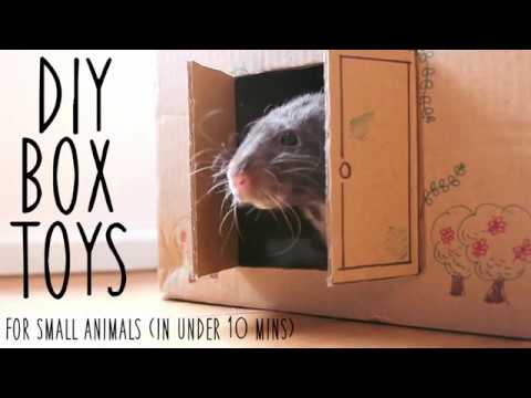 DIY BOX TOYS | For small pets