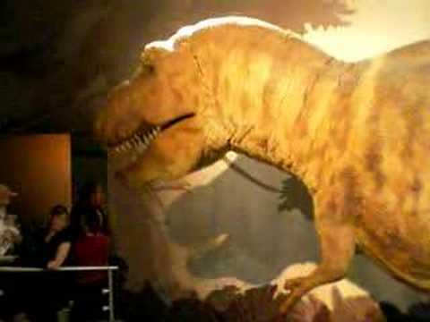 Museo de historia natural - T-Rex