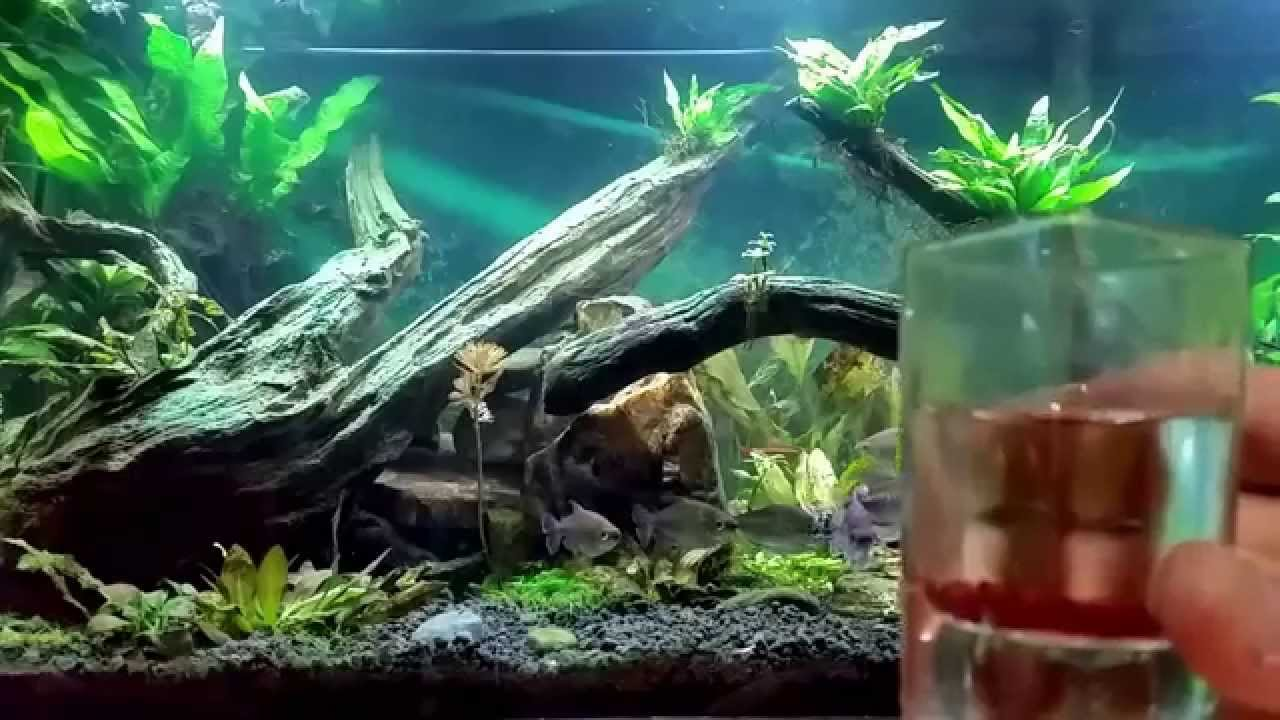 Freshwater aquarium fish bottom dwellers - A Way To Feed Shy Bottom Fish My African Tank