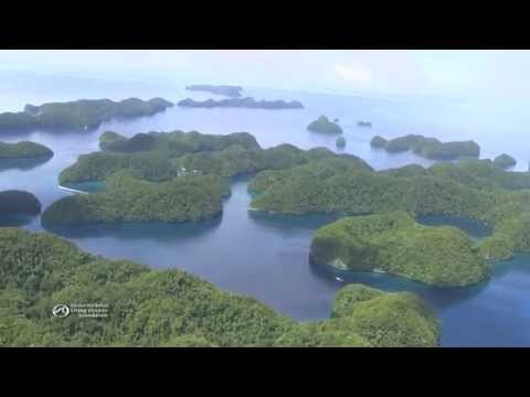 Life on the Reefs of Palau