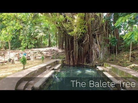 The Old Balete Tree in Siquijor