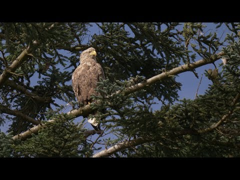 Isle Of Mull Wildlife