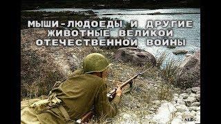 Мыши-людоеды и другие животные Великой Отечественной войны