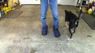 Lucy Training Level 3a Test Service Demo Dog