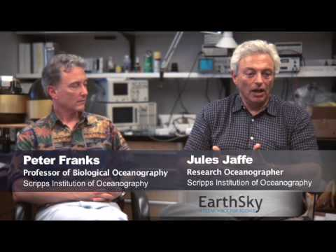 Jules Jaffe and Peter Franks' underwater robots