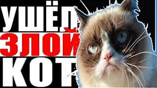 умерла сердитая кошка | мем grumpy cat - больше нет | сердитый кот