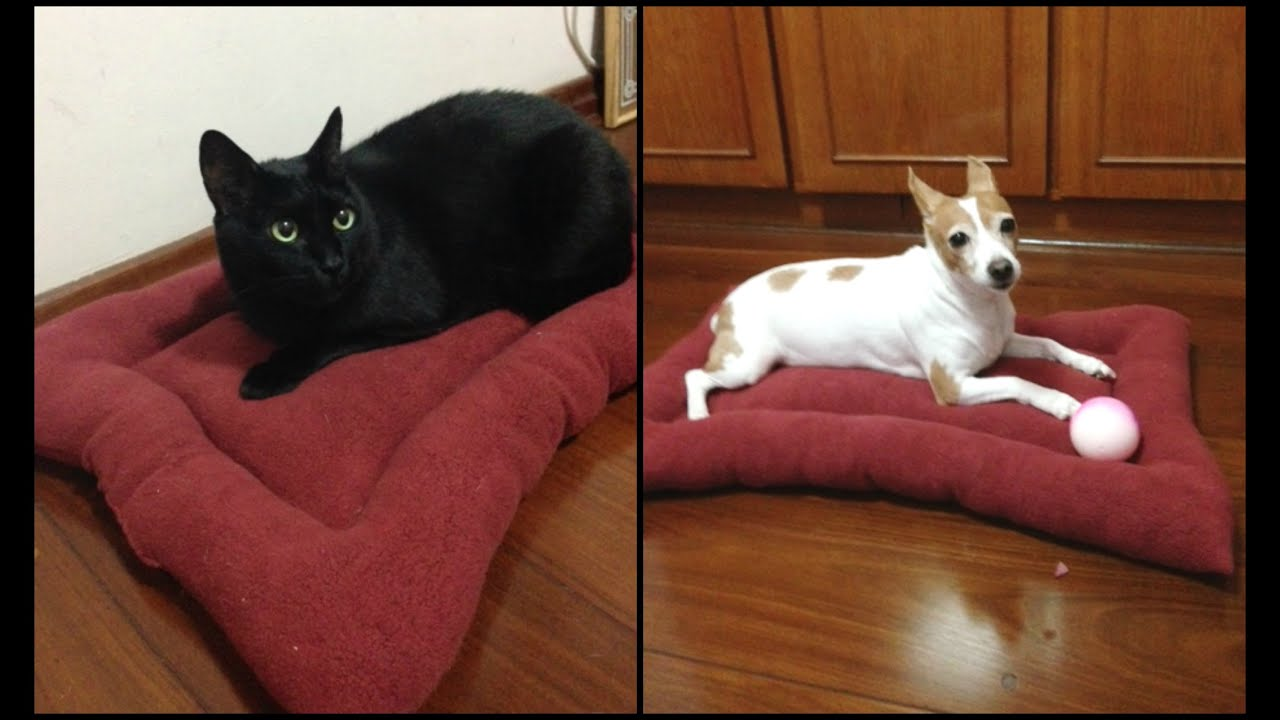 Como fazer cama de cachorro e gato youtube - Cama para gato ...