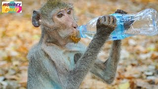 Skinny Monkey hurry to drink water coz hungry | Better soon coz eat & drink alot | Monkey Daily 2652 thumbnail