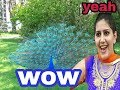 sapna chaudhary new song|| per mor ka mast dance 2018