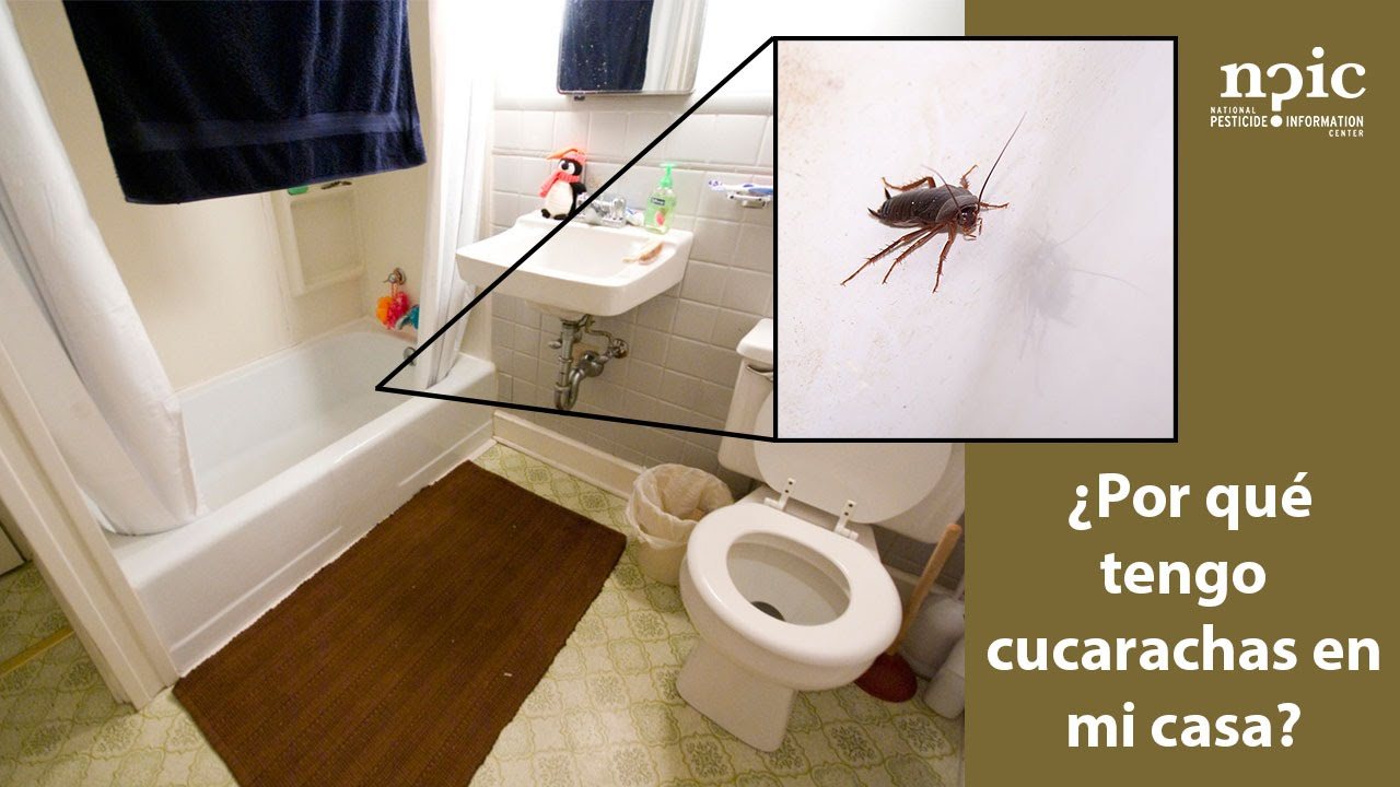 por qu tengo cucarachas en mi casa youtube