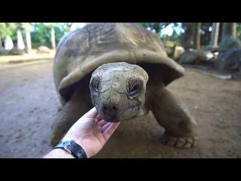 Mauritius - Hick Hiker - Travel Vlog 011