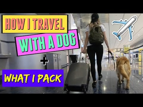 How I Prepare For Travel With A Dog // What I Pack