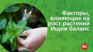 видео Важнейшие факторы прорастания семян