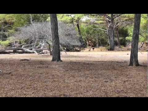 Tanzania Safari in Selous September 2011