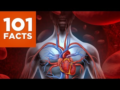 101 Facts About The Human Body