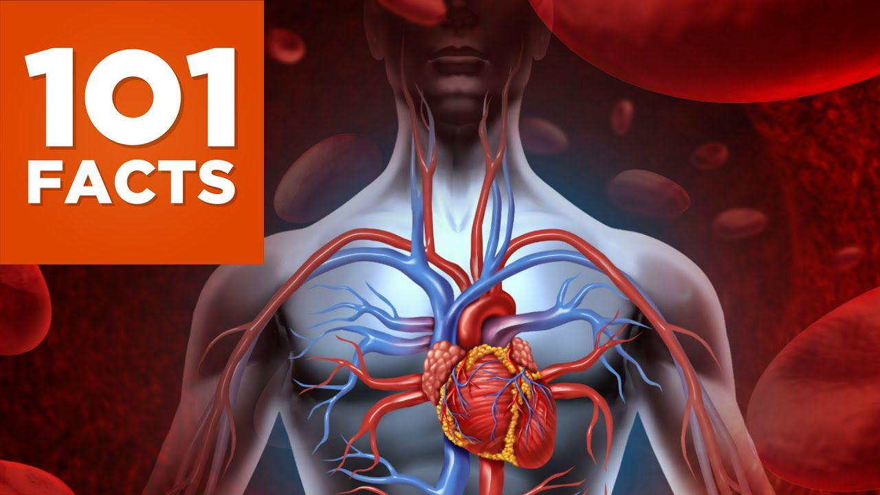 101 Facts About The Human Body - YouTube