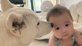 아기와 강아지가 서로 챙겨주는 넘 귀여운 장면 | 달달…
